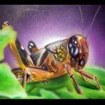 heuschrecke-medium-jpg