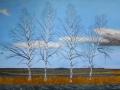 Birken im Breddorfer Moor