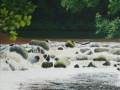 fingle-bridge-waterfall-1000.jpg