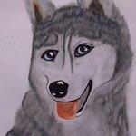 reginas-husky-aquarell-jpg