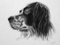 hundeportrait-kohlezeichnung-media