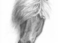 islandpferd-pferdeportrait-media
