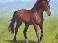 pferd-in-acryl-1-media