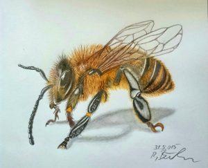Biene mit Bunstifte gemalt